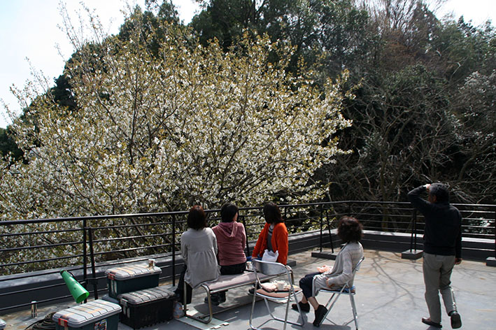 ohanami_lunch_s