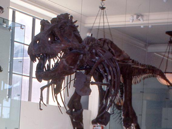 tyrannosaurus_amnh_2