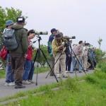 バードウィークにちなみ、手賀沼探鳥会が開催されます(5月8日(日))