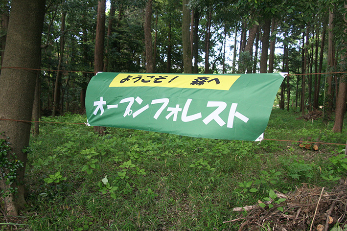 open_forest