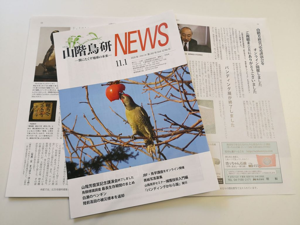 山階鳥研NEWS11月号表紙